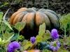 1011-Couleurs automne-05
