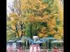 1011-Couleurs automne-10