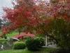 1011-Couleurs automne-11