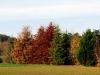 1011-Couleurs automne-13