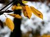 1011-Couleurs automne-19
