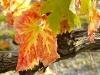 1011-Couleurs automne-31