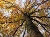 1011-Couleurs automne-32
