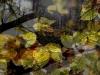 1011-Couleurs automne-37