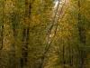 1011-Couleurs automne-40