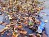 1011-Couleurs automne-41