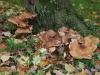 1011-Couleurs automne-42