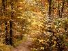1011-Couleurs automne-50