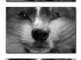 8 - Comme chien et chat !