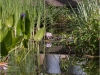 Jardin du Paradis-AF (2)
