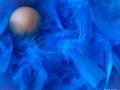 4-Loiseau-Bleu